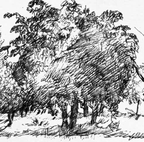 Tree drawn 1